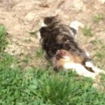 Tote Katze Holzgasse