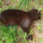Kritzendorf: Wer vermisst seine Katze