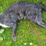 Katze am 7.5.2018 im Bachbett Kritzendorf