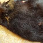 Katze Neudauerstrasse